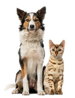 Contact us for the right business insurance to support your pet-friendly policy.